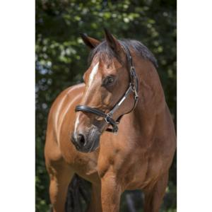 Licol Cuir Grooming avec Mousquetons, NORTON Pro